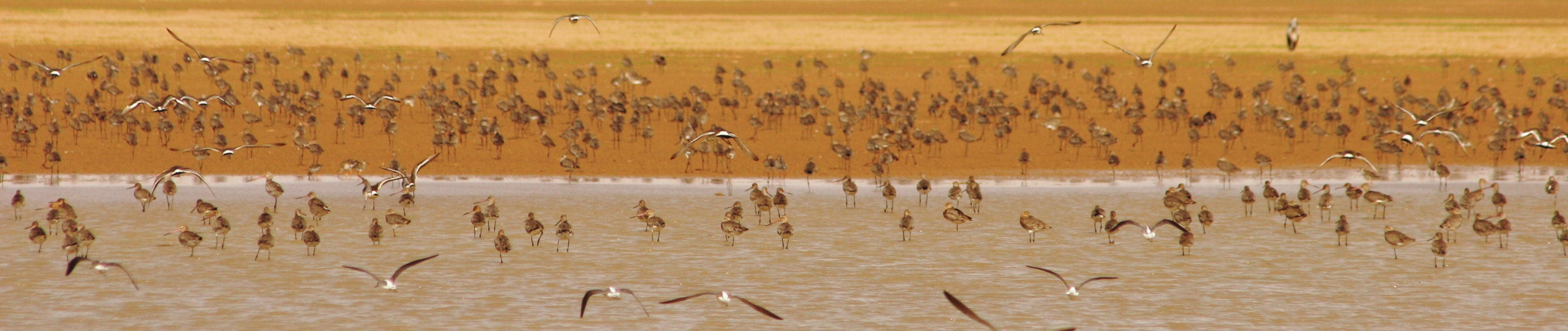 Vulnerable bird species and bird concentrations